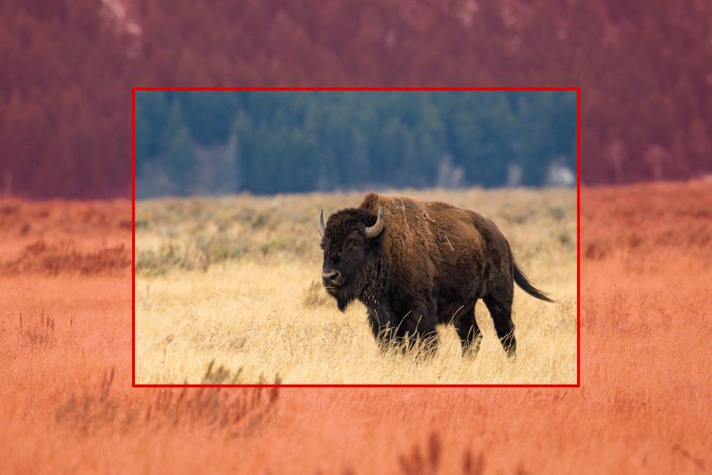 16_crop_bison