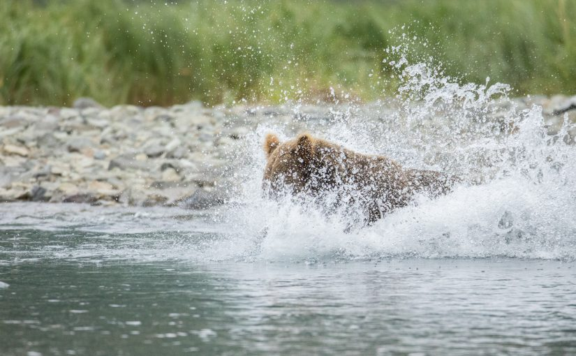 Katmai July 26 – 31: Coastal Bays
